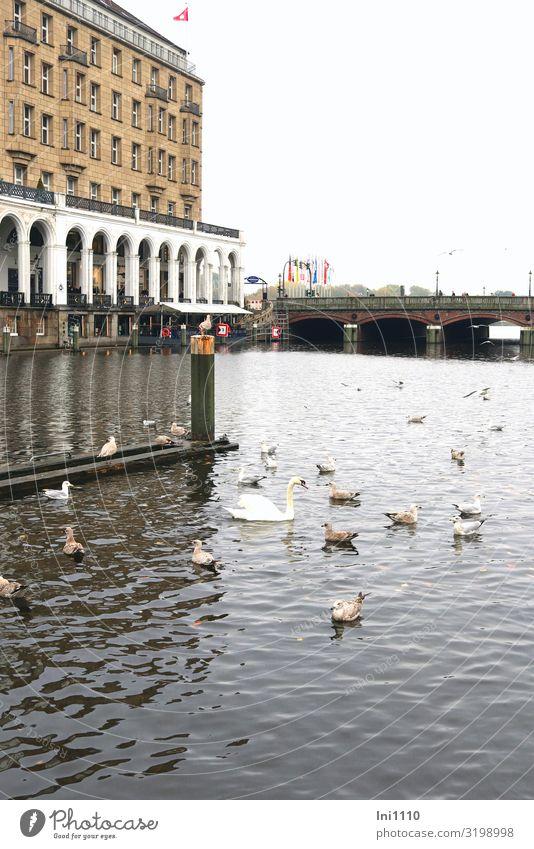 Kleine Alster | UT Hamburg Herbst Hafenstadt Haus Brücke Fassade Terrasse Sehenswürdigkeit Schwan Möwenvögel Tiergruppe blau braun schwarz weiß Jungfernstieg