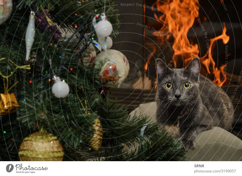 Katze Weihnachten & Advent Silvester u. Neujahr Tier kurzhaarig Haustier niedlich Brand Brandwunde fleischfressend Schornstein-Ecke Weihnachtsdekorationen