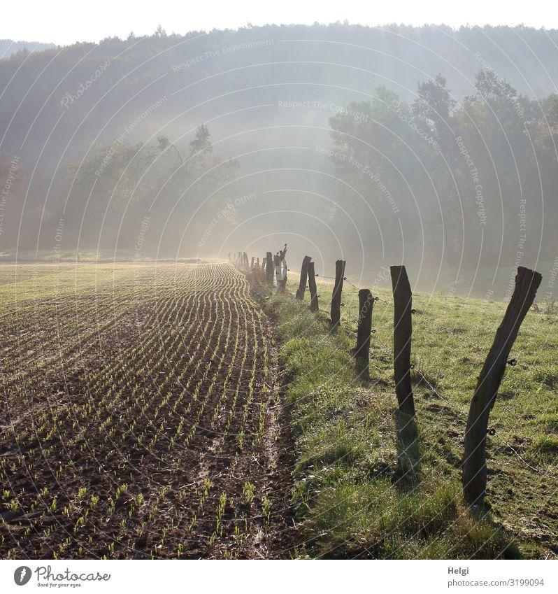 Landschaft im aufsteigenden Morgennebel mit Acker, Wiese, Zaun und Bäumen Umwelt Natur Pflanze Herbst Nebel Baum Gras Nutzpflanze Feld Zaunpfahl Holz stehen