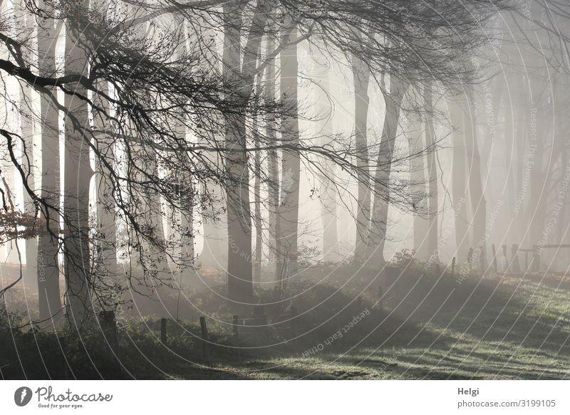 nebeliger Novembermorgen am Wandrand mit Sonnenstrahlen Umwelt Natur Landschaft Pflanze Herbst Nebel Baum Gras Zweige u. Äste Wiese Wald Waldrand leuchten