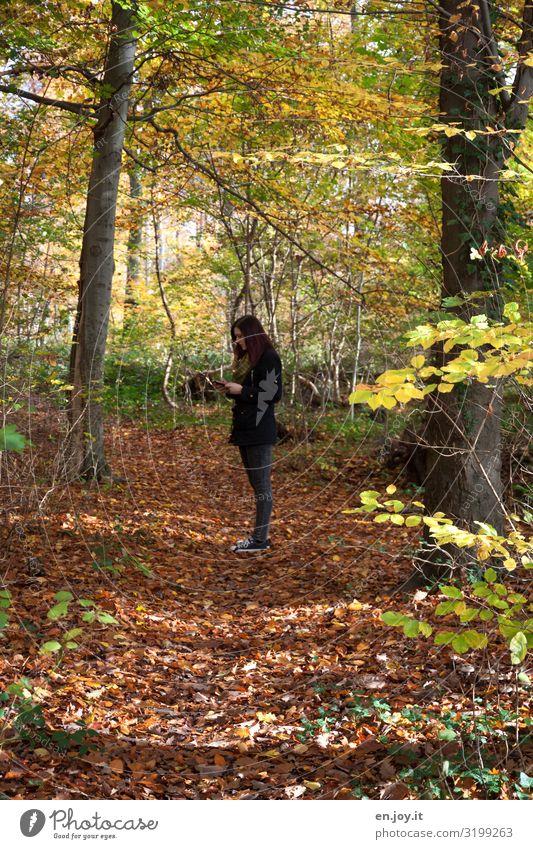 keinen Empfang Junge Frau Jugendliche 1 Mensch Umwelt Natur Landschaft Herbst Schönes Wetter Blatt Laubwald Herbstlaub herbstlich Herbstwald Wald gelb Stress