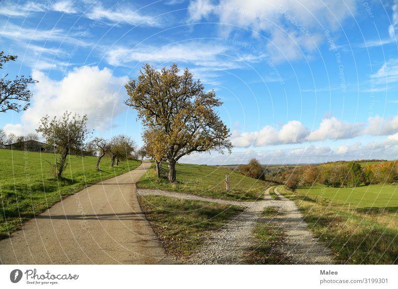 Herbstlandschaft Wolken Landschaft Natur Außenaufnahme Straße Himmel Steppe Sommer Gras trocken schön blau Tag Feld Wege & Pfade Fußweg ländlich Gabel
