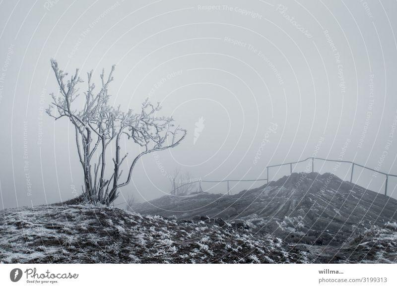 Nebel auf dem winterlichen Hirtstein im Erzgebirge Eis Frost Sträucher Baum kahl Hügel Felsen Raureif Basalt Nebelwand Nebelstimmung Nebellandschaft Satzung