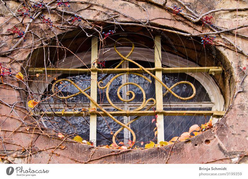 Ein altes, verziertes ovale Fenster mit Weinrabnken bewachsen Natur Wildpflanze Ranken Gebäude Mauer Wand Fassade beobachten hängen Traurigkeit verblüht