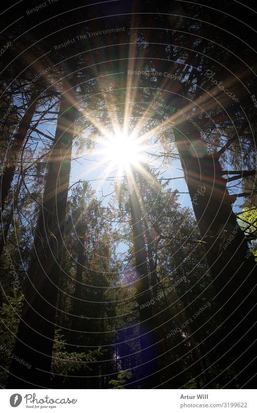 Im Sonnenlicht Umwelt Natur Landschaft Pflanze Himmel Sommer Schönes Wetter Baum Blatt Wald Alpen genießen wandern Gesundheit gigantisch glänzend Unendlichkeit