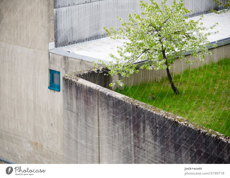 grauer Beton um grüner Fleck Frühling Baum Wiese Gebäude Schleuse Wachstum natürlich oben trist Stimmung Willensstärke standhaft bescheiden Schutz Überleben