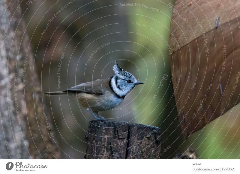 tit on a branch in the forest Natur Tier Winter klein Vogel