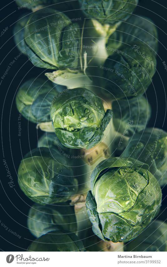 Makro eines frischen, nassen und grünen Rosenkohlstiels. Gemüse Frucht Ernährung Winter Garten Menschengruppe Natur Pflanze Blatt Tropfen Wachstum natürlich