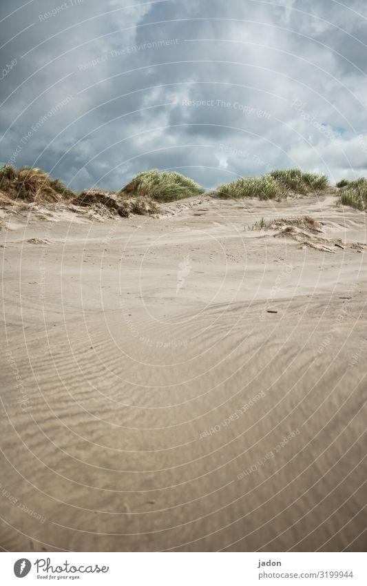 sommerliche aussichten. Düne Strand Sand Farbfoto Außenaufnahme Landschaft Natur Nordsee Dünengras Küste Himmel Ferien & Urlaub & Reisen Wolken Nordseeküste