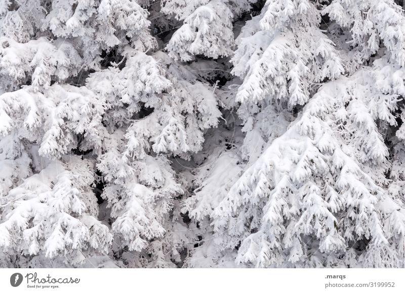 Neuschnee Weihnachten & Advent Umwelt Natur Winter Schnee Ast Nadelbaum kalt weiß bedeckt Farbfoto Außenaufnahme Strukturen & Formen Menschenleer