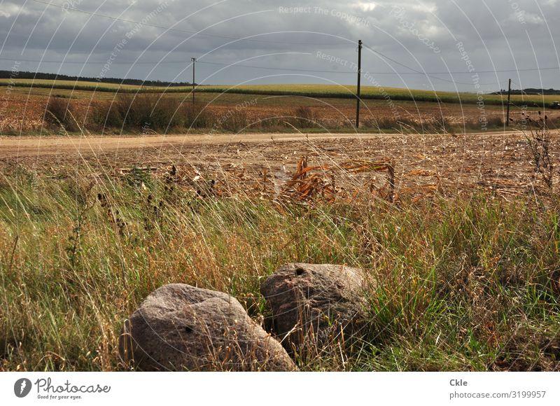 130 Kilometer bis Berlin Strommast Umwelt Natur Landschaft Pflanze Erde Himmel Wolken Gewitterwolken Horizont Wetter Unwetter Wind Sturm Gras Sträucher Wiese