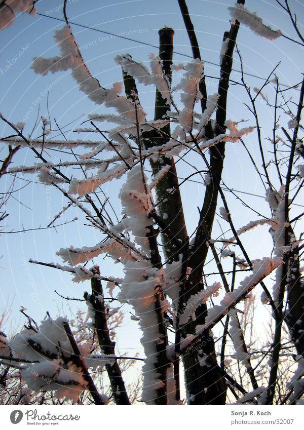 Väterchen Frost II Baum Winter kalt Eis Sträucher Ast Zweig
