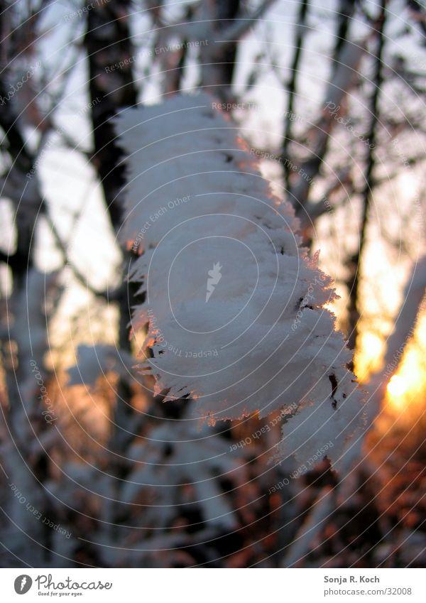 Väterchen Frost I Winter kalt Eis Ast Zweig Winterabend