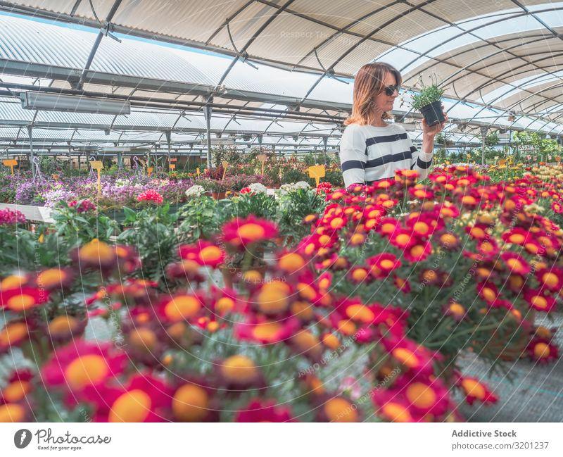 Weibchen studiert Blumen im Gewächshaus Frau Markt Pflanze Gärtner auserwählend Bodenbearbeitung Erwachsene Mensch hunkers Kniebeuge lernen Halt Kunde schön