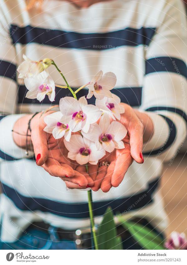 Weibchen mit schöner Orchidee in den Händen Frau Blume Hand weiß Überstrahlung natürlich Pflanze Erwachsene Mensch Halt Gartenarbeit Bodenbearbeitung Gartenbau