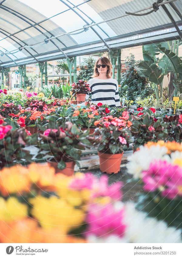 Weiblicher Kunde wählt Blumen im Gewächshaus Frau Karre kaufen Pflanze Überstrahlung Gartenarbeit Erwachsene Mensch stehen Putten auserwählend Handwagen schön