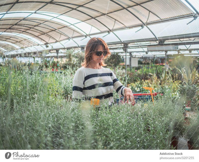 Nachdenkliche Frau wählt Blumen auf dem Markt aus Gewächshaus Pflanze grün auserwählend Gartenarbeit Kunde Zimmerpflanze Erwachsene Mensch Fürsorge besinnlich
