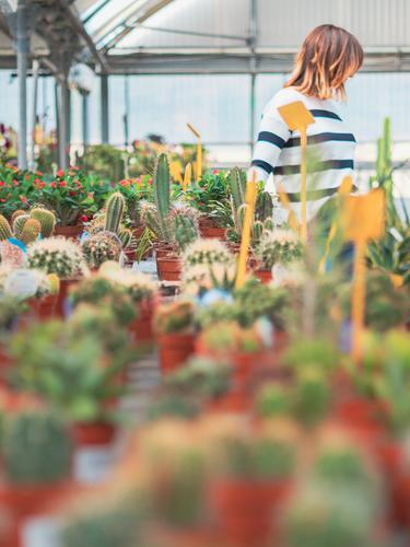 Weiblicher Kunde wählt Blumen im Gewächshaus Frau Karre kaufen Pflanze Überstrahlung Gartenarbeit Erwachsene Mensch stehen Putten auserwählend schön Gartenbau