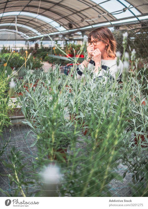 Nachdenkliche Frau wählt Blumen auf dem Markt Gewächshaus Pflanze grün auserwählend Gartenarbeit Kunde Zimmerpflanze Erwachsene Mensch Fürsorge besinnlich