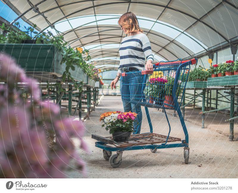 Kundin mit Wagen auf dem Blumenmarkt Frau Karre kaufen Pflanze Markt Gewächshaus Gartenarbeit Erwachsene Mensch besinnlich Kunde stehen Denken auserwählend