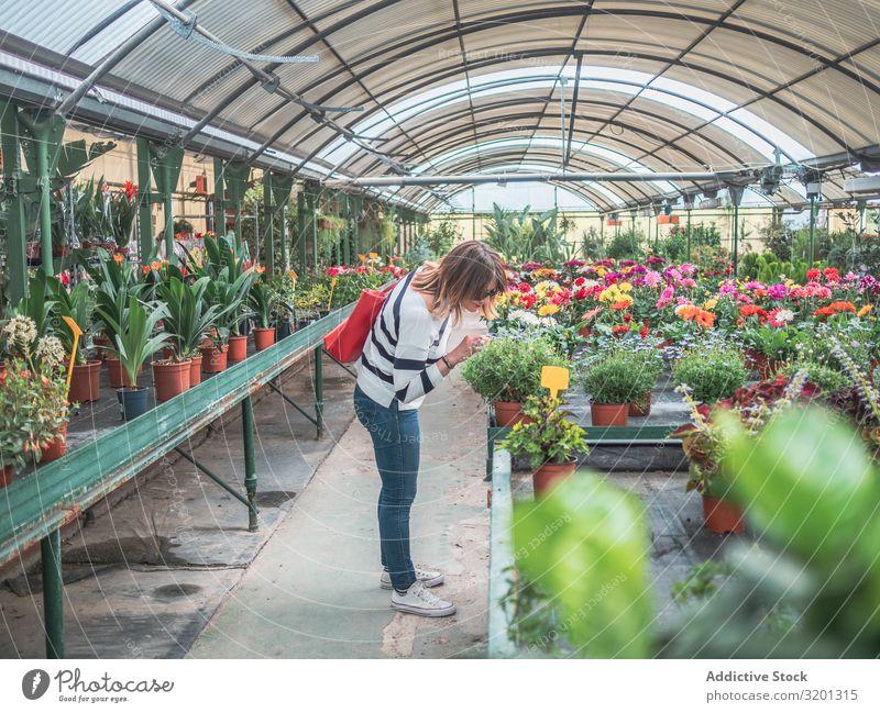 Frau wählt Pflanzen für den Garten auf dem Blumenmarkt grün zeigen Markt Gewächshaus Kunde Zimmerpflanze Erwachsene Mensch lässig stehen auserwählend