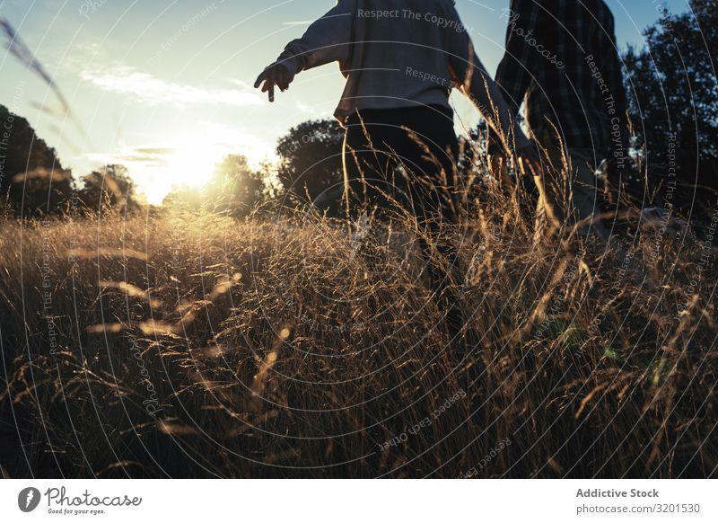 Liebespaar beim Spaziergang auf goldenem Feld Paar Sonnenuntergang ländlich Gold Zusammensein romantisch schön Gras Zufriedenheit Partnerschaft Aussicht