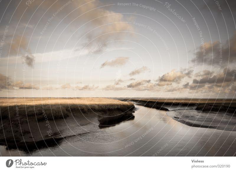 Rømø   ...fairytale II Natur Pflanze Landschaft Wolken ruhig Erholung Küste Wetter Insel Nordsee Dänemark Sumpf Moor Rømø