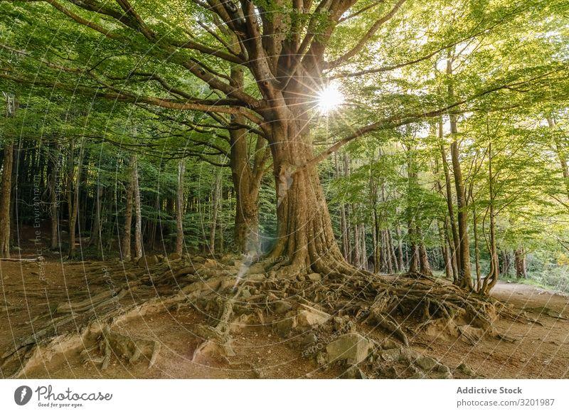 Baum inmitten des Waldes Natur Landschaft grün Ferien & Urlaub & Reisen schön Park Pflanze Umwelt Gras Trekking wandern Sonnenlicht Sonnenstrahlen Jahreszeiten