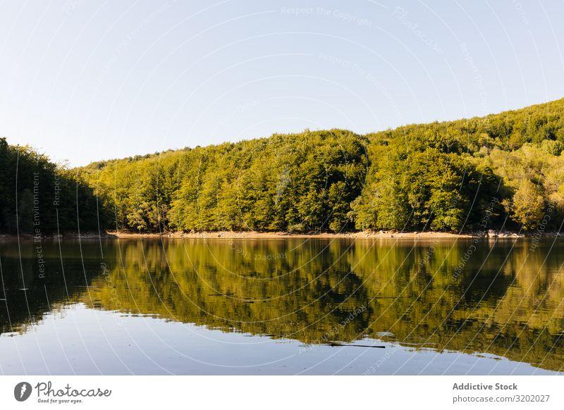 Reflexionen im See eines Waldes Sträucher Sonnenuntergang Landschaft ruhig Himmel Oberfläche Reflexion & Spiegelung grün Wasser Natur Aussicht Pflanze Küste