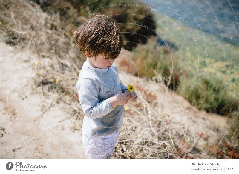 Kind betrachtet Blume in Händen in den Bergen mit Interesse klein Sand Berge u. Gebirge Säuglingsalter niedlich Spielen Freude erkundend schön heiter Kindheit