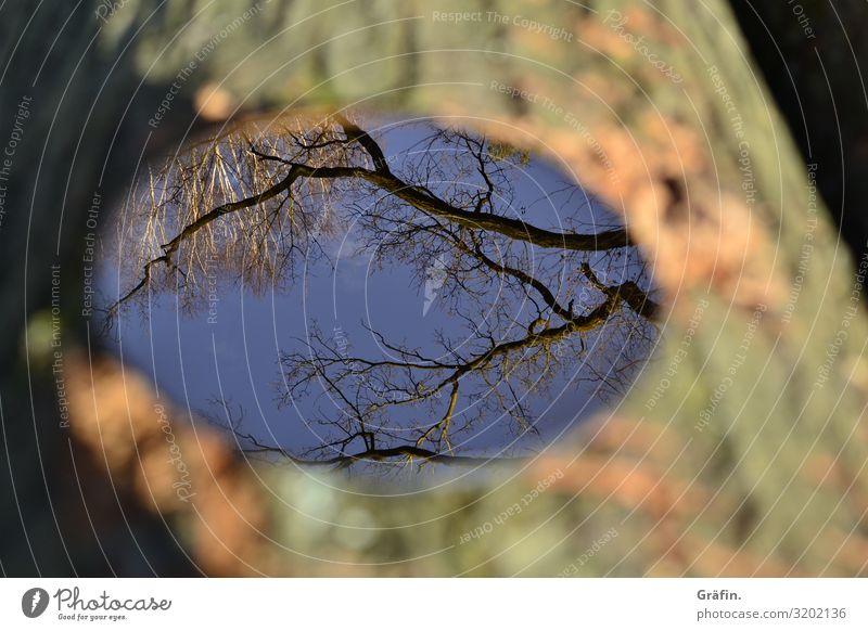 Spieglein, Spieglein Himmel Natur Pflanze blau Baum Wolken Einsamkeit ruhig Holz Herbst Umwelt braun Dekoration & Verzierung Horizont leuchten glänzend