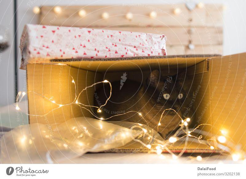 Katze in einer Weihnachtsgeschenkbox mit Beleuchtung Glück Winter Dekoration & Verzierung Feste & Feiern Weihnachten & Advent Silvester u. Neujahr Tier Haustier