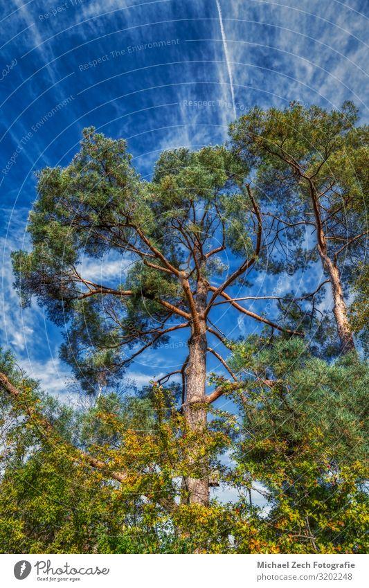 Schöne Bäume bei Tageslicht in den Schweizer Alpen schön Ferien & Urlaub & Reisen Sommer Sonne Garten Umwelt Natur Landschaft Pflanze Himmel Wolken Baum Gras