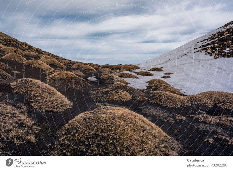 Dornenkissen Winter Schnee wandern Natur Landschaft Pflanze Erde Himmel Wolken schlechtes Wetter Dürre Sträucher Gipfel Vulkan Ätna dehydrieren Wachstum kalt