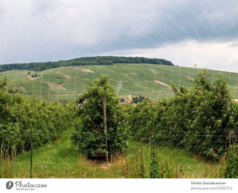 Champagnerquelle Ferien & Urlaub & Reisen Tourismus Ausflug Sommer Sommerurlaub Umwelt Natur Landschaft Pflanze schlechtes Wetter Gewitter Nutzpflanze Wein
