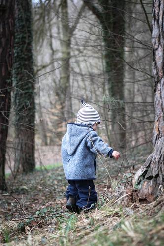 Junge im Wald Ausflug Kind Kindheit 1 Mensch 1-3 Jahre Kleinkind Baum Hose Jacke Mütze Kapuze entdecken Spielen klein blau braun grau Schutz Verantwortung