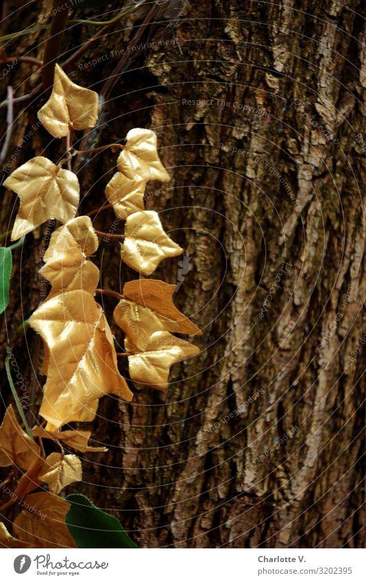 Zum 300. etwas Gold | UT HH19 Umwelt Pflanze Baum Blatt Baumrinde Holz Kunststoff Lorbeer hängen leuchten streichen außergewöhnlich elegant fantastisch glänzend