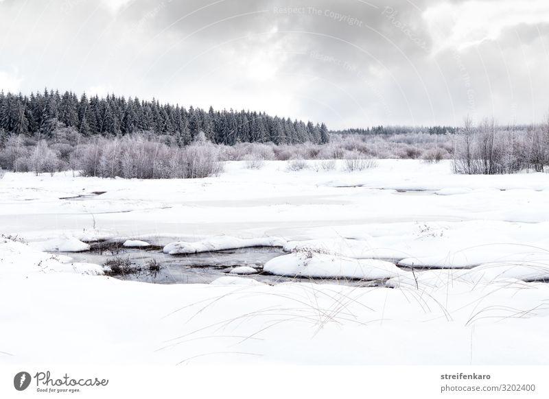 Trübe Aussichten Ferien & Urlaub & Reisen Tourismus Ausflug Winter Schnee wandern Umwelt Natur Landschaft Pflanze Urelemente Luft Wasser Himmel Wolken Eis Frost
