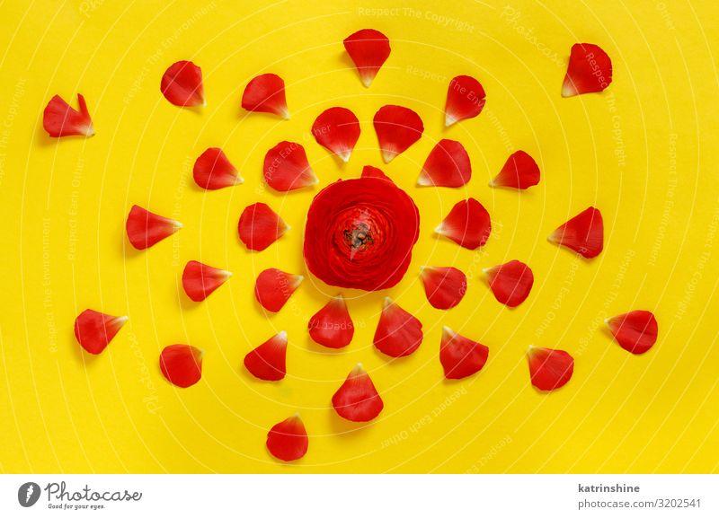 Rote Blumen auf gelbem Hintergrund Frühling Sommer Blatt Blüte rot mehrfarbig Nahaufnahme