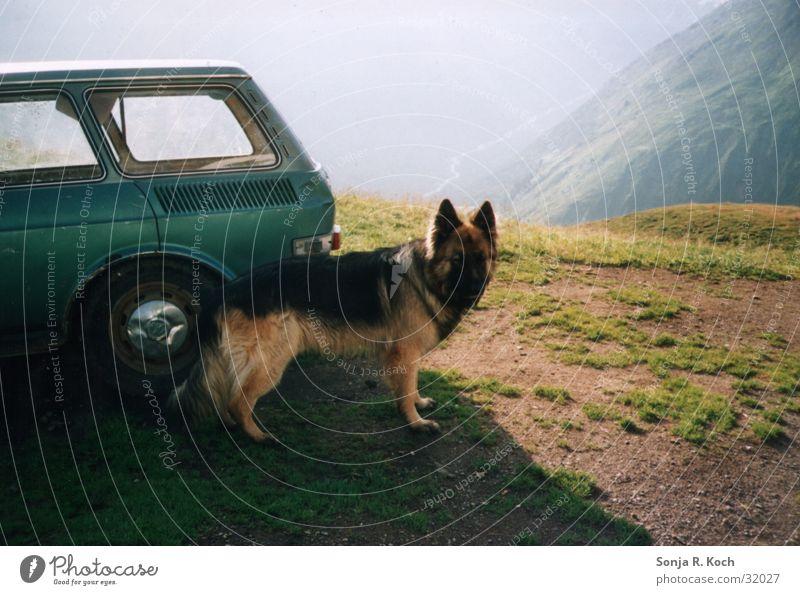 Der Wächter Berge u. Gebirge Hund PKW Niveau Deutscher Schäferhund