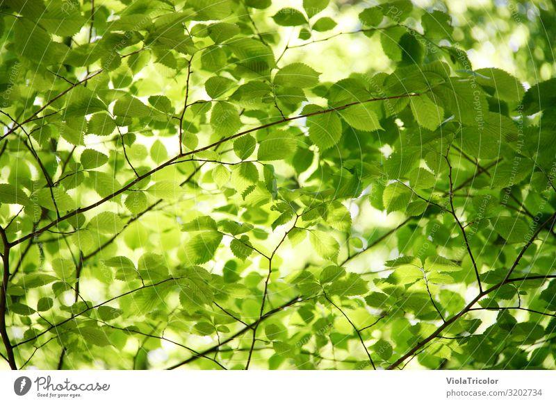 Es grünt so grün! Natur Sommer Baum Erholung Blatt ruhig Wald Gesundheit Umwelt Frühling Garten Park frisch Wachstum Energiewirtschaft