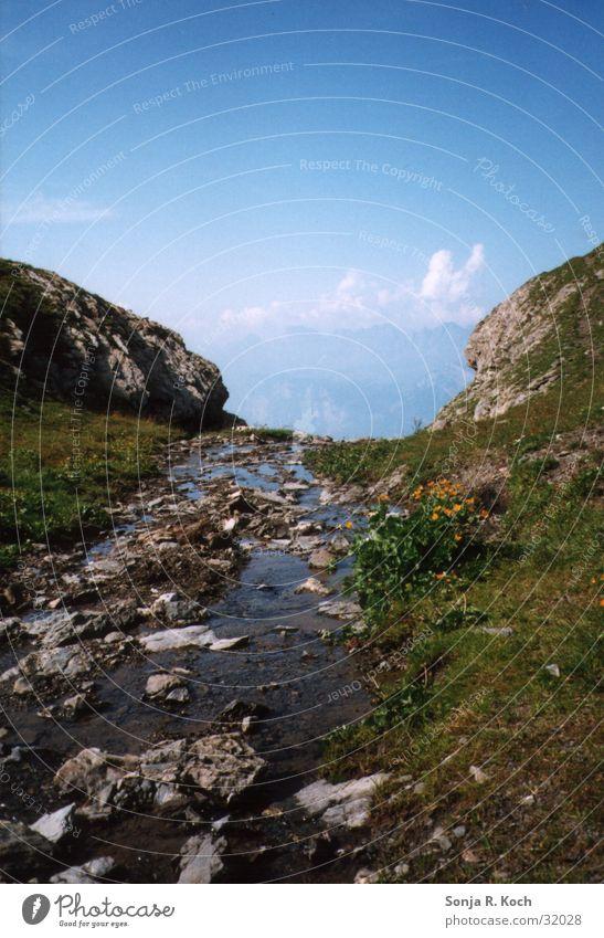 Gebirgsbach Wasser grün Sommer Berge u. Gebirge Stein nass Bach Erfrischung Kühlung