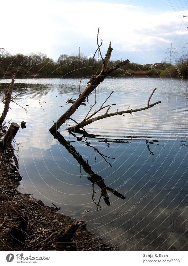Spieglein, Spieglein... See Gewässer Baumstamm Reflexion & Spiegelung ruhig Strand Wasser Küste