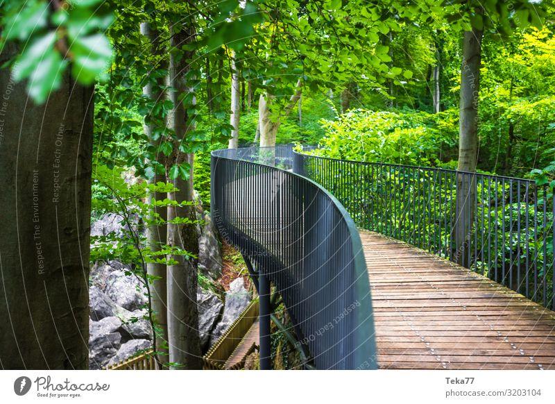 Felsenmeer #1. Umwelt Natur Landschaft Pflanze Urelemente Baum Wald Urwald Hemer Sauerland Dorf ästhetisch Waldlehrpfad Farbfoto Außenaufnahme