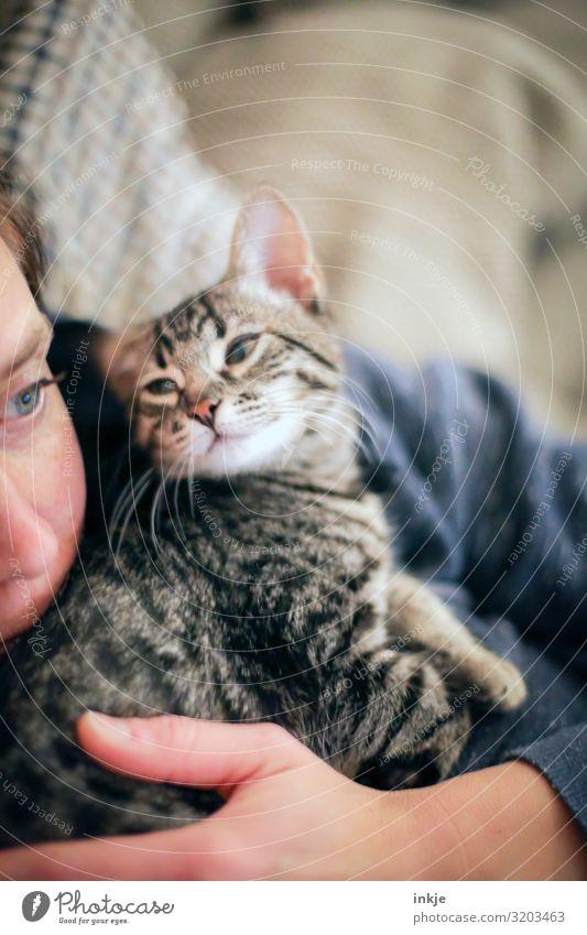 Kuscheln Katze Frau Mensch Hand Tier Gesicht Tierjunges Lifestyle Erwachsene Leben feminin Gefühle klein Zusammensein Häusliches Leben Freizeit & Hobby