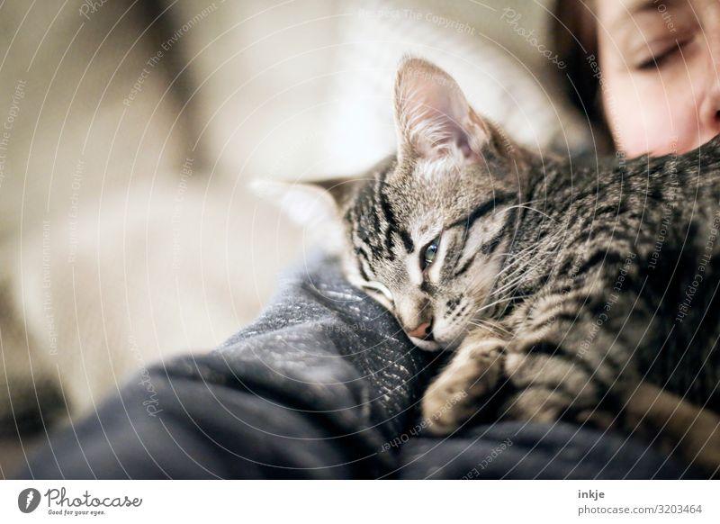 müde Lifestyle Freizeit & Hobby Häusliches Leben feminin Frau Erwachsene Gesicht 1 Mensch Haustier Katze Katzenbaby Tier Tierjunges liegen schlafen authentisch