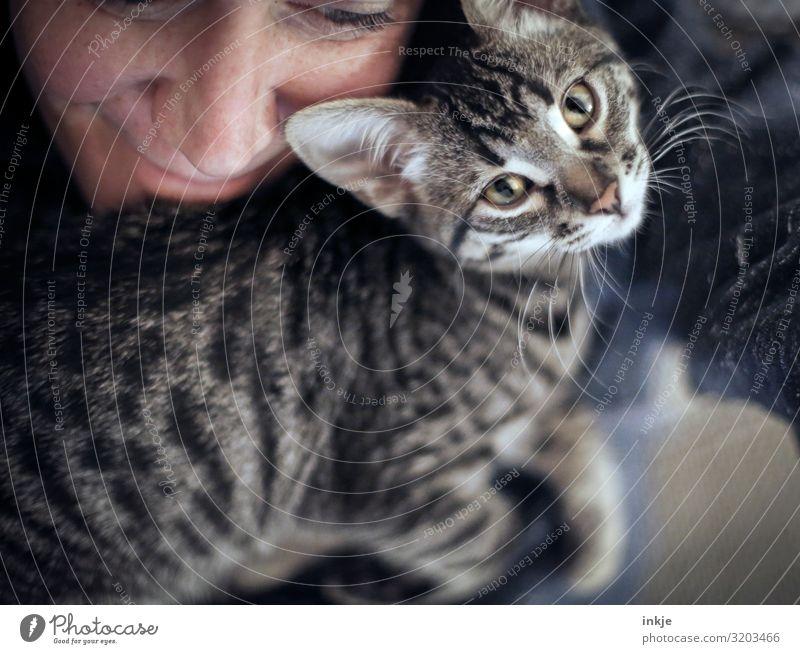 Nähe Lifestyle Freizeit & Hobby Häusliches Leben feminin Gesicht 1 Mensch Tier Katze Tiergesicht Tierjunges Lächeln Blick kuschlig nah niedlich Gefühle Freude