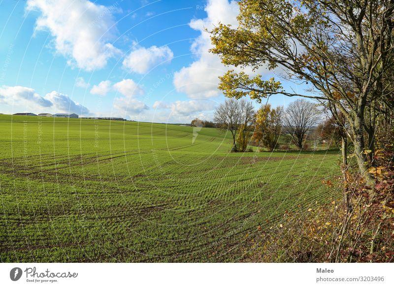 Ländliche Landschaft Feld Landwirtschaft Herbst Natur grün Weizen Gras Pflanze Ernte ländlich Jahreszeiten Winter Tag Bauernhof natürlich Sonne Sonnenstrahlen