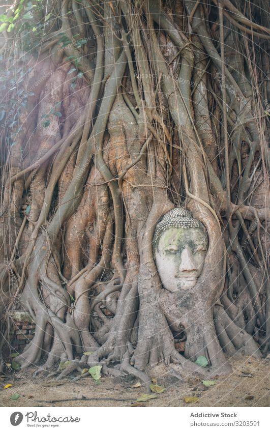 Mit Baumwurzeln bedecktes Buddha-Gesicht Wurzel Statue bewachsen antik Skulptur überdeckt verstecken Thailand Stein alt Religion & Glaube Wachstum Leben Tempel
