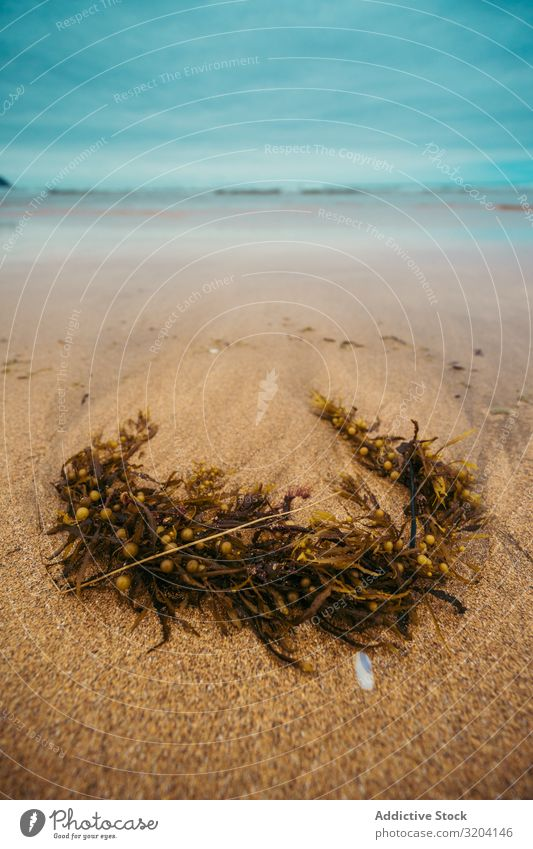 Nasspflanze am sandigen Meeresufer Hängerolle Strand Sand nass rau zarautz Spanien Landschaft Wasser Natur Sommer Küste alt Treibholz Ast marin Tod Himmel